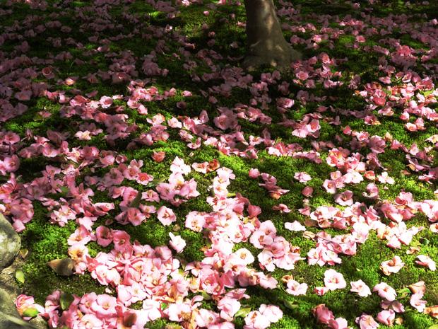 京都法然院の椿